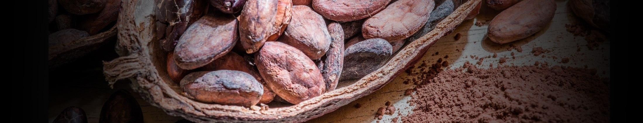 Ontdek hoe onze ingrediënten de beste pralines garanderen